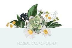 Projeto do ramalhete floral do vetor: a flor da camomila da camomila do jardim, bagas ramifica, as folhas verdes ilustração stock