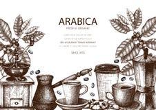 Projeto do vetor com ilustrações tiradas mão do café da tinta Planta da goma-arábica com esboço das folhas e dos frutos Molde do  ilustração do vetor