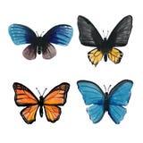 Projeto do vetor da coleção da borboleta ilustração stock