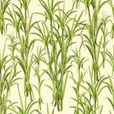Projeto do vetor de Sugar Cane Exotic Plant Seamless Pattern ilustração do vetor