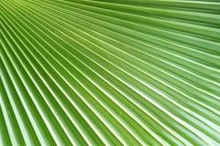 Projeto em folha de palmeira Fotografia de Stock