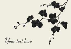 Projeto estilizado da filial da orquídea ilustração royalty free