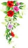 Projeto floral Foto de Stock