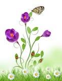 Projeto floral bonito Fotos de Stock Royalty Free