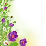 Projeto floral bonito Foto de Stock