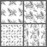 Projeto floral do papel de parede do fundo do teste padrão do vetor das folhas tropicais sem emenda preto e branco Fotos de Stock
