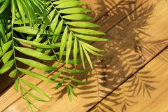 Projeto mínimo da arte dos verdes tropicais Arte contemporânea fotografia de stock royalty free