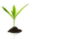 Projeto novo da vida (conceito do crescimento) foto de stock