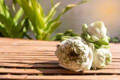 Projeto para três flores em botão verdes de lótus no espaço de madeira de bambu da tabela e da cópia no fundo da planta imagens de stock