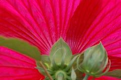 Projeto por Natureza Foto de Stock Royalty Free