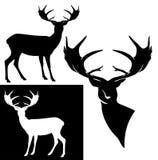 Projeto preto e branco da silhueta dos cervos do chifre fotos de stock