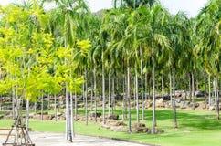 Projeto tropical bonito do jardim em Tailândia Imagens de Stock