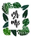 Projeto tropical com folhas de palmeira exóticas ilustração do vetor