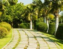 Projeto tropical do jardim Fotos de Stock Royalty Free
