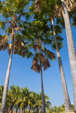 Projeto tropical do jardim Imagem de Stock Royalty Free