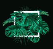 Projeto tropical do molde das folhas do vetor Fotos de Stock Royalty Free