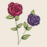 Projetos das rosas Imagens de Stock