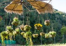 Projetos do jardim com o potenciômetro de flor de suspensão Imagem de Stock