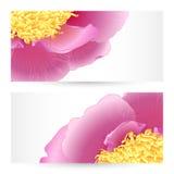 Projetos gráficos das peônias dos moldes do vetor. Imagens de Stock Royalty Free