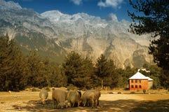 Prokletije berg, sikt från den Thethi byn, fotografering för bildbyråer