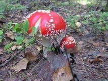 Prolifera rápidamente el verano del otoño de la naturaleza de la vegetación Foto de archivo