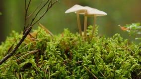 Prolifere rápidamente en bosque del otoño entre el musgo y los árboles, cierre para arriba metrajes