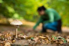 Prolifere rápidamente en el bosque con la muchacha de la cosecha de la seta Fotos de archivo
