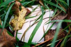 Prolifere rápidamente en la hierba en la hoja del otoño Imagen de archivo