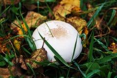Prolifere rápidamente en la hierba en la hoja del otoño Fotos de archivo