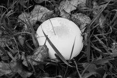 Prolifere rápidamente en la hierba en la hoja del otoño Imagen de archivo libre de regalías