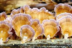 Prolifere rápidamente en la madera muerta en la selva tropical tropical Imagen de archivo libre de regalías