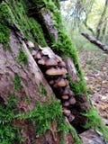 Prolifere rápidamente en la naturaleza del otoño del bosque de hojas caducas de Rusia central Fotos de archivo libres de regalías