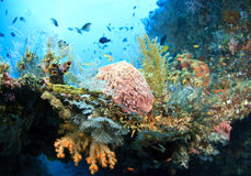 Prolific coral growth Stock Photos