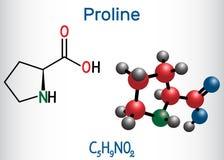 Proline proline van L, Pro, proteinogenic het aminozuurmolecule van P Structureel chemisch formule en moleculemodel vector illustratie