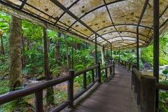 Promenad i skogen Royaltyfri Foto