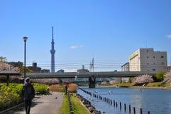 Promenad längs den Sumida floden, med Tokyo SkyTree i bakgrunden royaltyfri bild