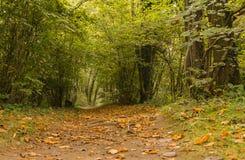 Promenad nära den Venoge floden Royaltyfri Bild