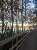 promenada tła ogniska cień drzewa pierwszoplanowi mokradła Zdjęcie Stock