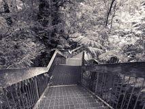 Promenade à la galerie de forêt tropicale Images libres de droits