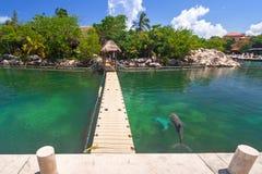 Promenade à la mer des Caraïbes avec des dauphins de natation Photographie stock