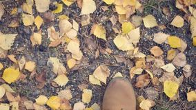Promenade à pied dans les groupes rouges en parc, au sol avec les feuilles d'automne jaunes 4k, 3840x2160 HD banque de vidéos
