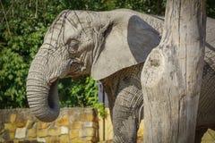 Promenade énorme d'éléphant photo libre de droits