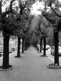 Promenade. Photos libres de droits