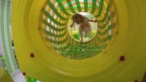 Promenade active de fille bien que trou rond de terrain de jeu L'enfant mignon de visage ont l'amusement clips vidéos