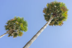 Promenade along the sea of palms in Marbella Andalucia Spain Royalty Free Stock Photography