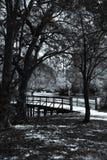 Promenade augmentée au lac swan Photo libre de droits