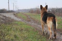 Promenade, berger allemand, chemin de fer photographie stock
