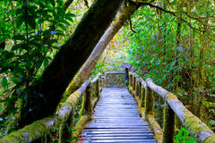 Promenade in bos Stock Afbeelding