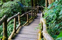 Promenade in bos Royalty-vrije Stock Afbeelding