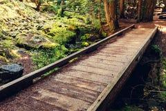 Promenade in bos Stock Foto